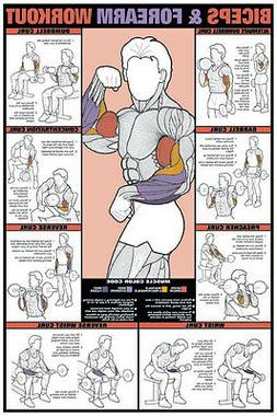 """Bicep & Forearm Workout 24"""" x 36"""" Paper Poster -NFC9_A Gym C"""