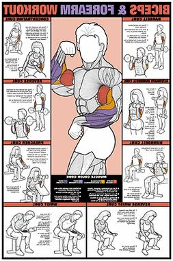 "Bicep & Forearm Workout 24"" x 36"" Laminated Poster -CEF7B Gy"
